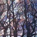 #1088 Watercolor trees